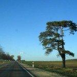 Дерево на дороге