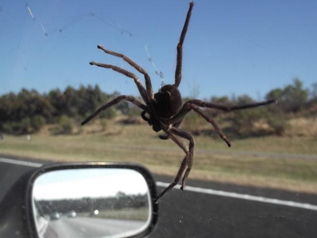Паук в машине примета — к чему такое происходит, есть ли реальная опасность